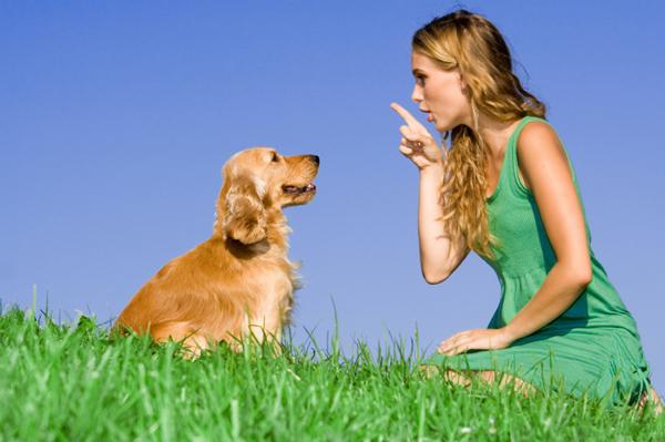 honden training