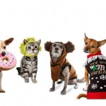 8 x kerstcadeautjes voor je hond en kat