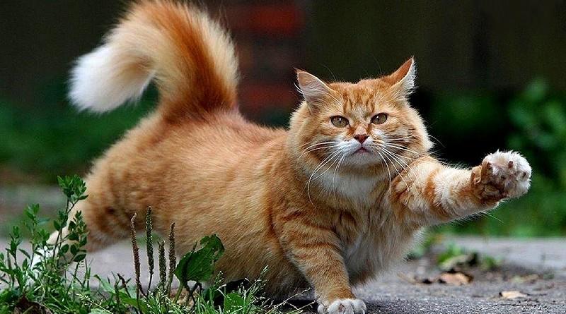 25 tekenen dat je kat pijn zou kunnen hebben