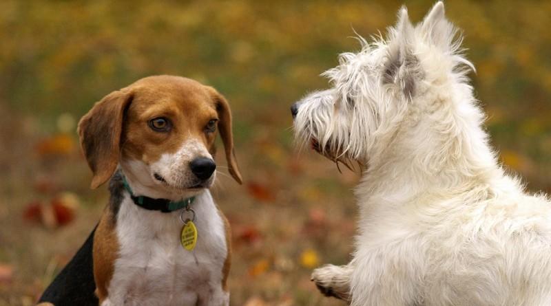 20 dingen die we van huisdieren kunnen leren