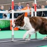 Het grootste hondenevenement van Nederland: Hond Event 2016