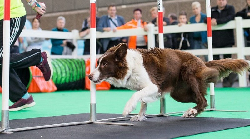 Hond Event 2016