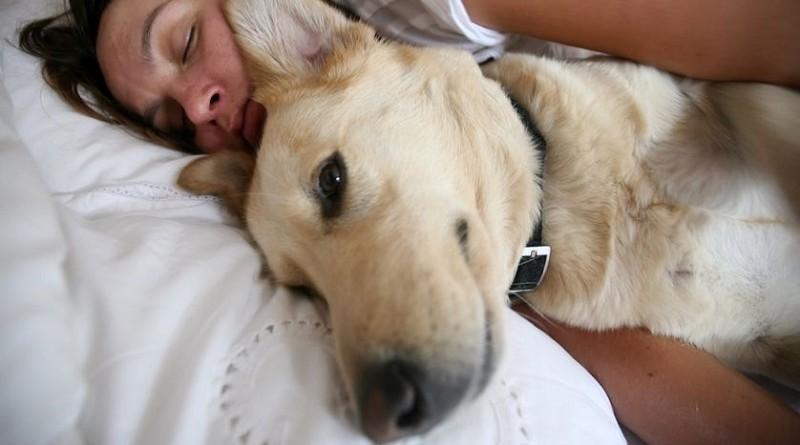 Nieuwe studie onthuld hoe huisdieren van invloed zijn op je slaapkwaliteit