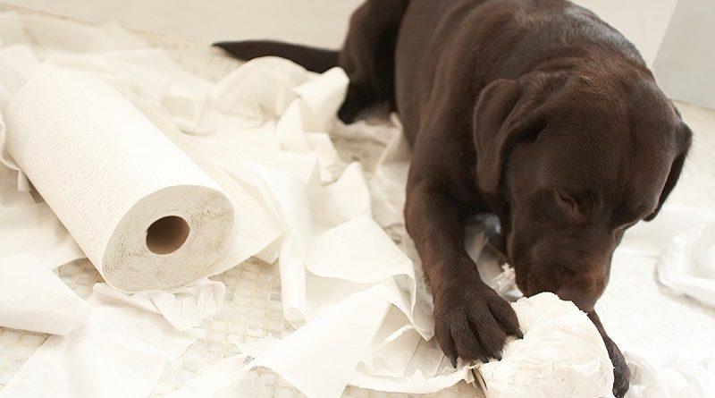 4 tips om ongewenst gedrag van de hond af te leren