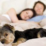 Waarom slapen met je hond goed voor je is!