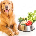5 gezonde gewoonten voor huisdieren en hun eigenaren