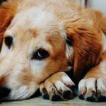 Tips voor winterblues bij honden
