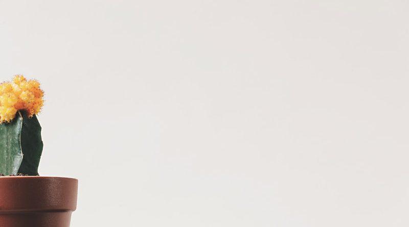 Vaarwel Spullen - het handboek voor minimalisme