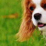 Het is weer tijd om stappen te ondernemen om huisdieren te beschermen tegen vlooien en teken