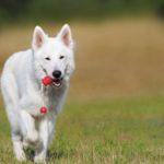 Weten honden wat ze ruiken?