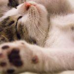 5 gezondheids tips voor je kat