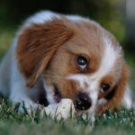 Is je tuin huisdiervriendelijk?